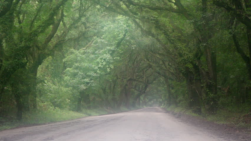 A Beautifully Eerie Dirt Road With Tree Canopy Covered In Spanish Moss On A Rainy Day On Botany Bay Plantation On Edisto Island SC Stock Footage Video ... & A Beautifully Eerie Dirt Road With Tree Canopy Covered In Spanish ...