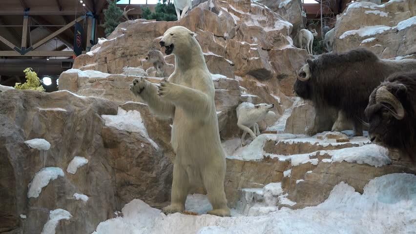 LEHI, UTAH - JUN 2014: Arctic wildlife taxidermy display sporting goods store. Taxidermy Polar Bear and Musk Oxen wildlife natural life. Education of animals and their natural environment.