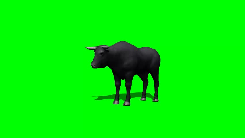 bull standing and looking around