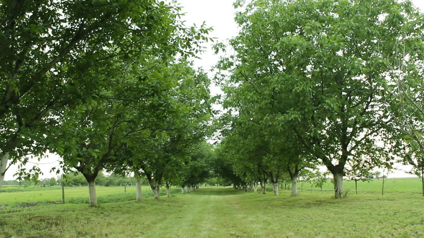 Orchard fruit trees nature beautiful green ecology