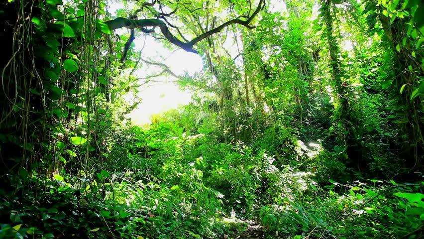 Amazonian rainforest, Brazil