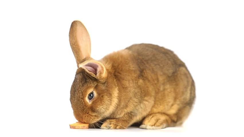 Rabbit eats carrots | Shutterstock HD Video #7111405