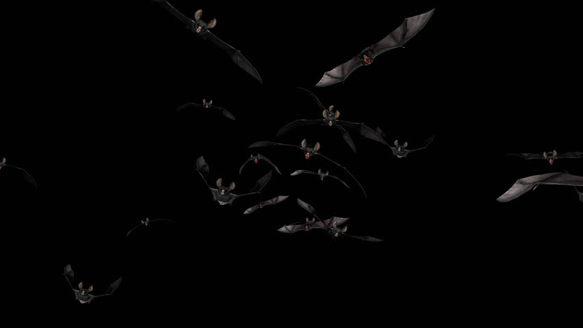 Bat Swarm - Front Flying Transition 2 - Alpha Channel - Aggressive vampire bats for your horror, Halloween, grunge, fairytale and fantasy projects… 3D animation with transparent back... | Shutterstock HD Video #7344835