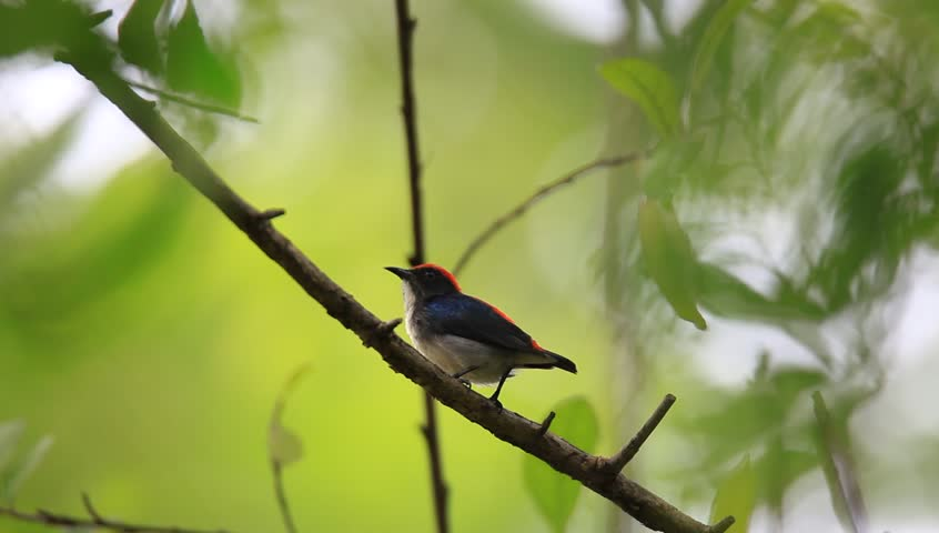 Header of flowerpecker
