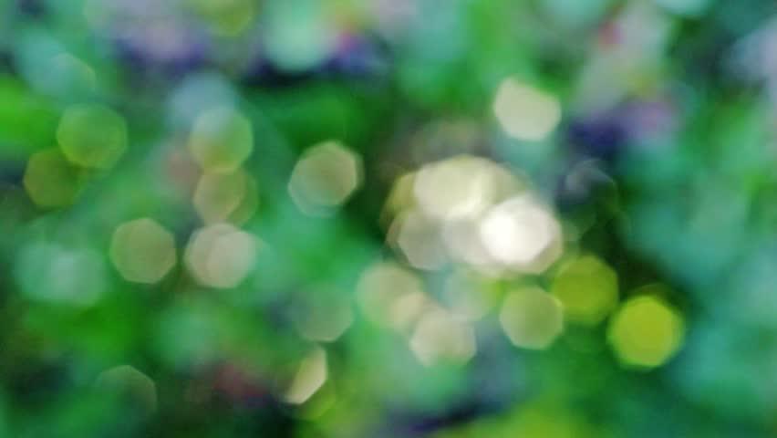Event Bokeh Loop Light Drops Green Yellow White Colors - Bokeh us map
