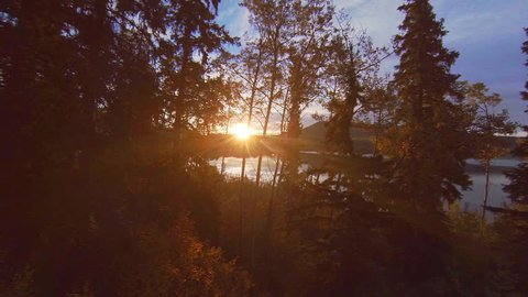 Aerial rising up over sunlight glowing birch trees and lake to see forest beyond and highway at dawn.