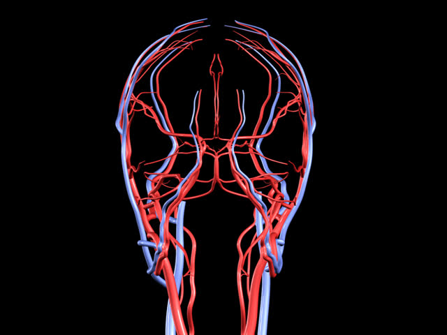 Hd Brain Arteries And Veins Stock Footage Video 100 Royalty Free