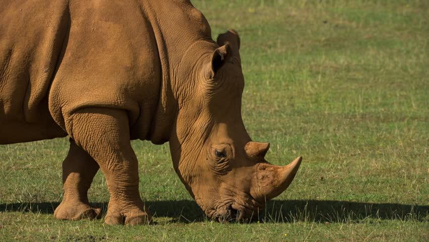 Header of Endangered Species