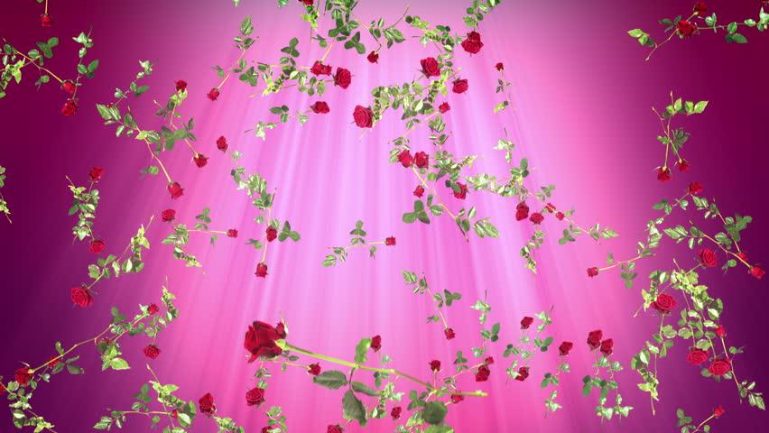 Loop Of Falling Red Roses Stock Footage Video 100 Royalty Free 8242015 Shutterstock