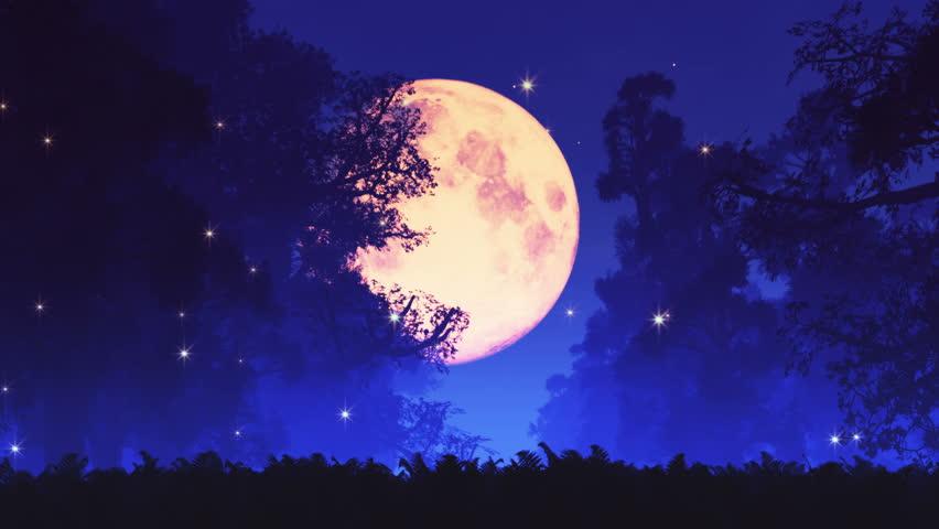 Fireflies Stock Footage Video | Shutterstock