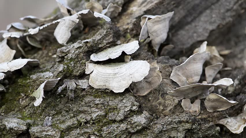 Winter forest in the midwest closeup pan and zoom right to left winter forest in the midwest right to left panning macro shot of white shelf fungus thecheapjerseys Gallery