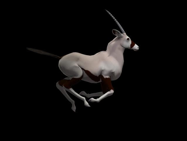 Oryx Alpha Channel Seamless Loop Oryx,  orix, deer, red deer, hart, stag, oryx, fawn, goat, goatling, ibex, sheep, ewe, walk, jump, run,  3d Model Motion Graphics