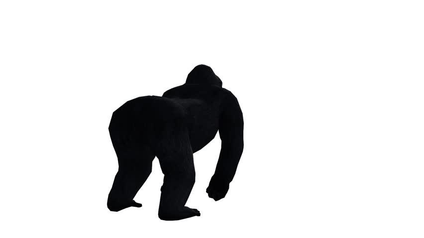 Chimp & Chimpanzee attack,Endangered wild animal.anthropomorphism. cg_02376 | Shutterstock HD Video #8747041