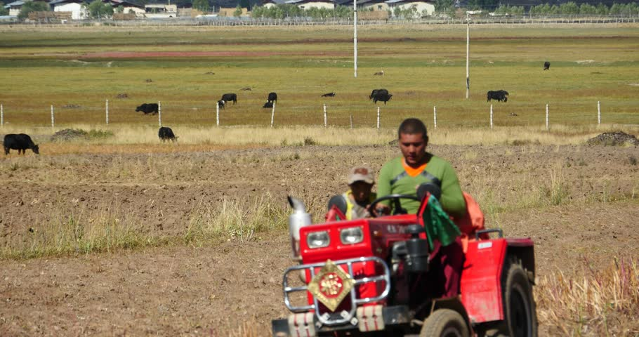 SEPTEMBER 16, 2014:4k tibetan people use farm tractor on arable land in shangrila yunnan,china. gh2_10445_4k
