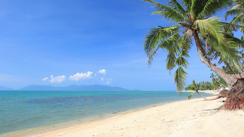 Tropical beach and palm tree | Shutterstock HD Video #8852365