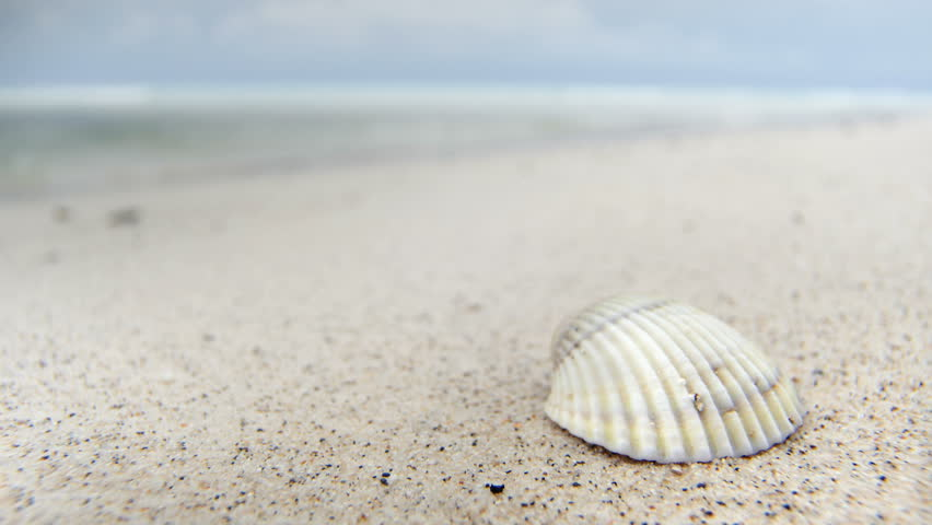 A Seastar And Several Shells In White Sand With Three Hearts Stock ...