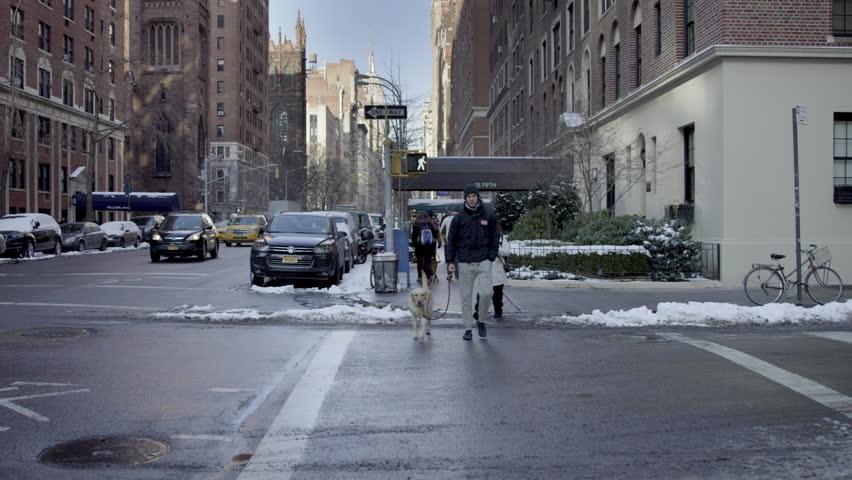 new york feb 17 2015 man walking dog in winter snow - Marble Canopy 2015