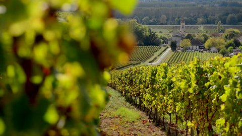 Bordeaux vineyard in autumn