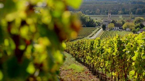 Bordeaux vineyard in autumn