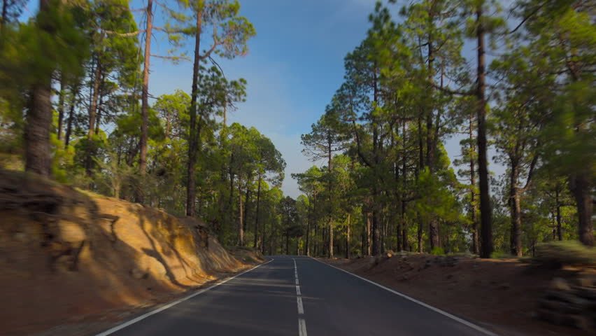 POV. Driving in mountain relict pine forest, Tenerife, Canary islands.