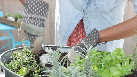 Camera tracks woman as she digs soil and puts plants into containers on rooftop garden.Shot on Sony FS700 at frame rate of 25fps