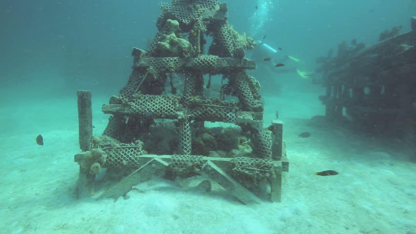 Stock Video Clip Of Scuba Divers Exploring Artificial Reef