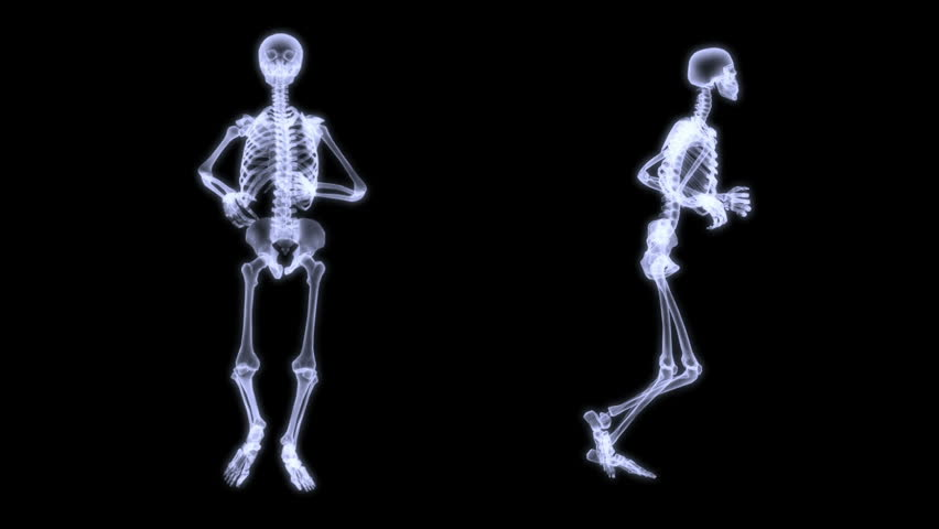 human skeleton stock footage video | shutterstock, Skeleton