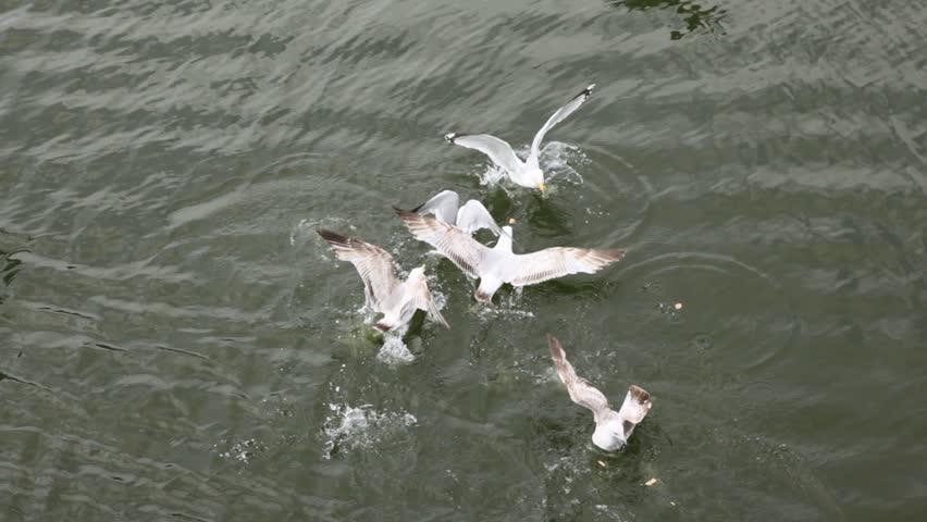 Top down view on some little seagulls playing in water and making splashes
