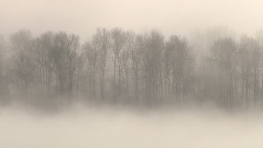 Thick Fog Covers Forest Landscape Stock Footage Video (100 ...