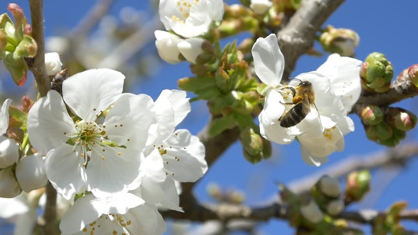 Image result for bees and trees images