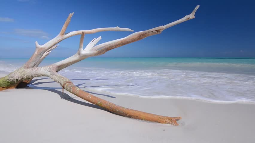 Large white-washed branch of driftwood lies on beautiful tropical Caribbean beach with turquoise green water as gentle sea waves wash over soft pure white sand under sunny blue sky with natural sounds