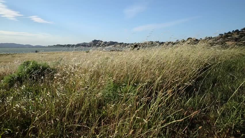 Wide Shot Of Wind Blowing Through The Grass At Point Richmond With Deep  Depth Of Field