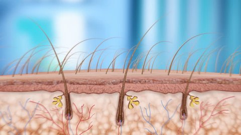 hair follicle with an effect on the root hairs of smaller molecules later, thinning and destruction